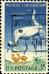 Wildlife conservation. Whooping cranes. US postage.