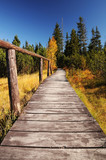 Wooden walkway through wetlands and forest poster