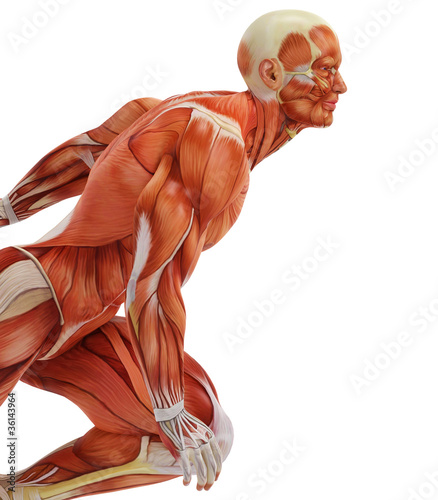 muscle man run close up
