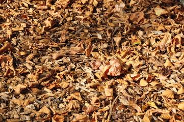 feuille d'automne 5