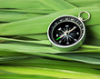 compass on  leaves of cane