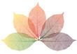 autumn leaves, vector set