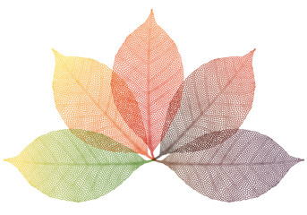 autumn leaves, vector set