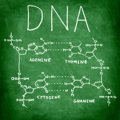 DNA chemistry structure on chalkboard