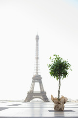 Plant with the Eiffel Tower in the background, Paris, Ile-de-France, France