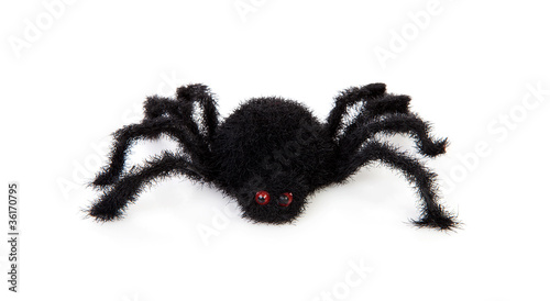 black scary hairy toy spider over white background