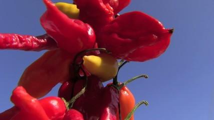 peperone peperoncino rosso giallo