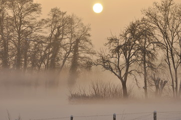 Winter im Nebel