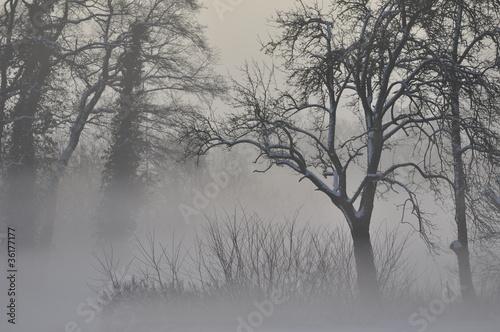 Fototapeten,winter,kalt,nebel,dezember