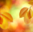 Fall. Autumn Background