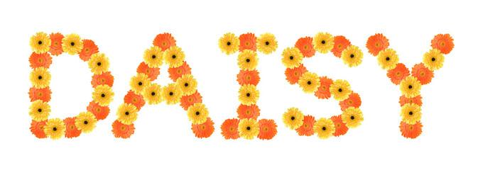Daisy word created by daisy flowers