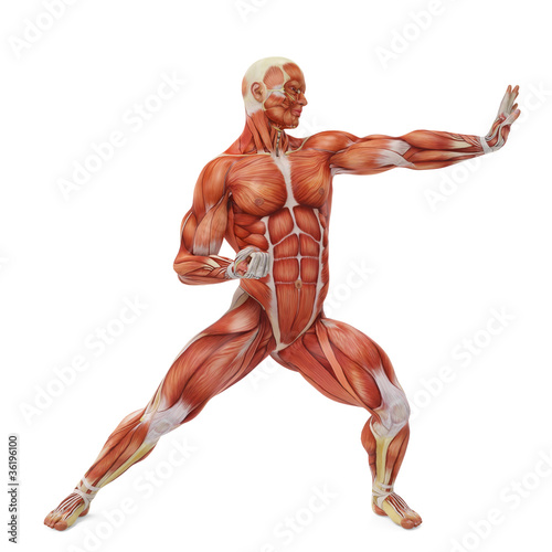 muscle man karate pose