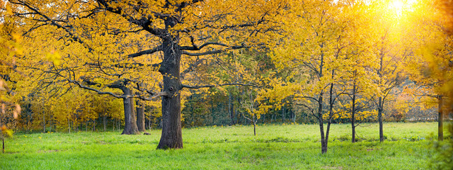 Panorama of a mixed forest with oak in autumn sunny day
