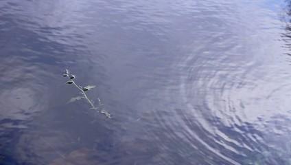 Осень, упавший лист на воде сносит течением