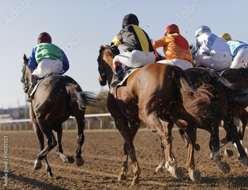 Closeup of racing horses starting a race