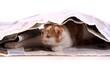 junge katze versteckt in Zeitung