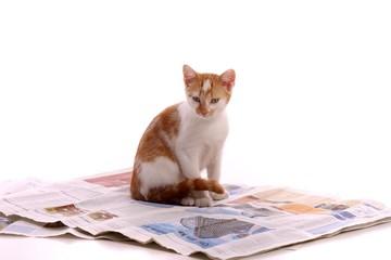 junge Katze sitzend auf Zeitung