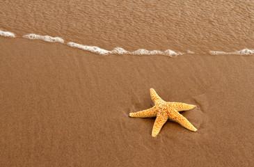 Starfish on Red Prince Edward Island Sand