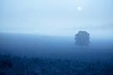 grassland in fog