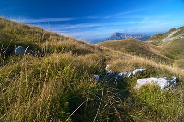 Mountain grass landscape