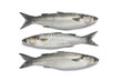 Whole fresh grey mullets - 36214974