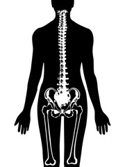 Spine & pelvis icon vector