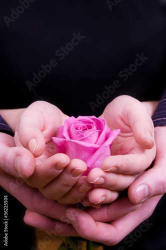 Boy's and girl's hands with pink rose flower