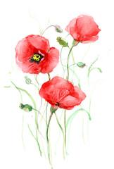 poppies (seris C)