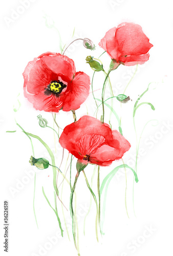 poppies (seris C)