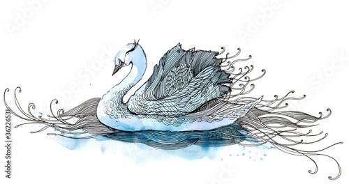 swan (series C)