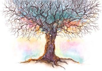 old tree (series C)