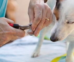 Tagliare  unghie al cane