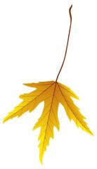 [V] Herbstblatt