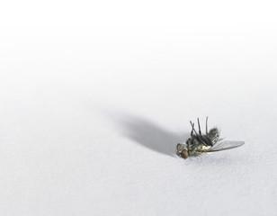 dead fly in light back