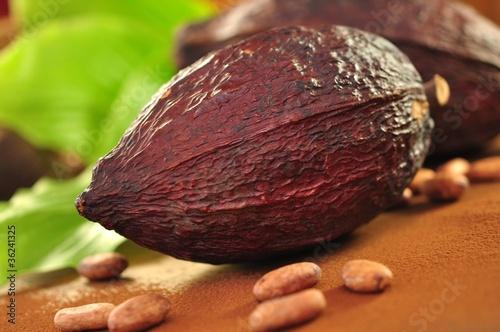 Kakao, Bohnen