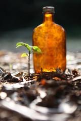 ビンと木の芽
