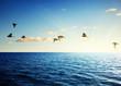 Fototapeten,karibik,luft,atlantic,schöner