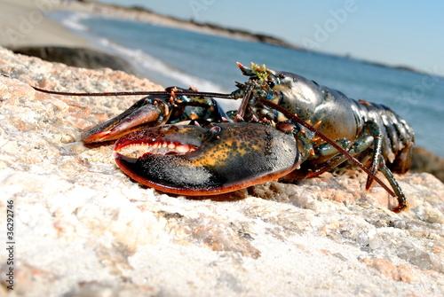 Leinwandbild Motiv Beach Lobster