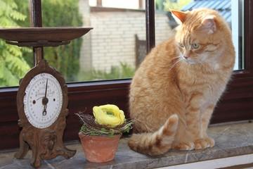 braune Katze mit antiker Waage vor Fenster