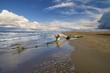 Tronco de arbol muerto en la playa