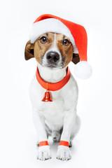 dog dressed up as santa