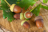 Acorns on Tree Stump