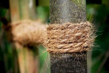 Hanfseil zur Stabiliserung an einem Baumstamm