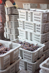 wine making industry crates