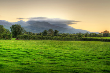 Idyllic sunset scenery over irish meadow