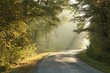 Lane running through the autumn forest in misty October morning