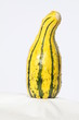 Ornamental Gourd (Yellow and Green)