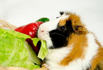 Rosette erbeutet Salat