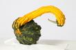 Ornamental Winged- Cucurbita gourds