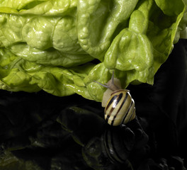 Grove snail and green salad
